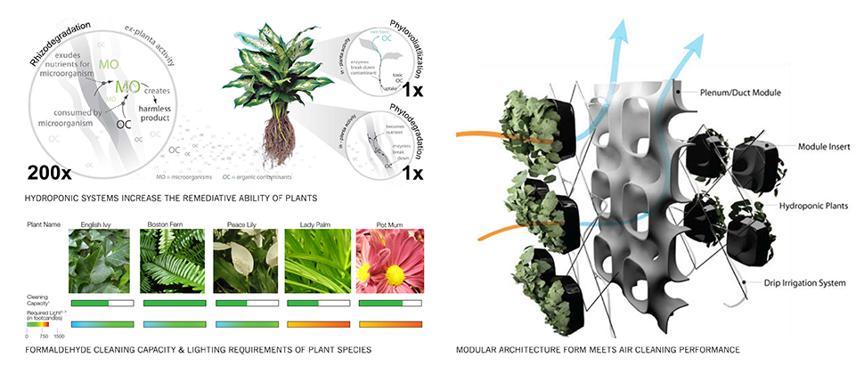 Diagram shows how the plants' roots filter the air.