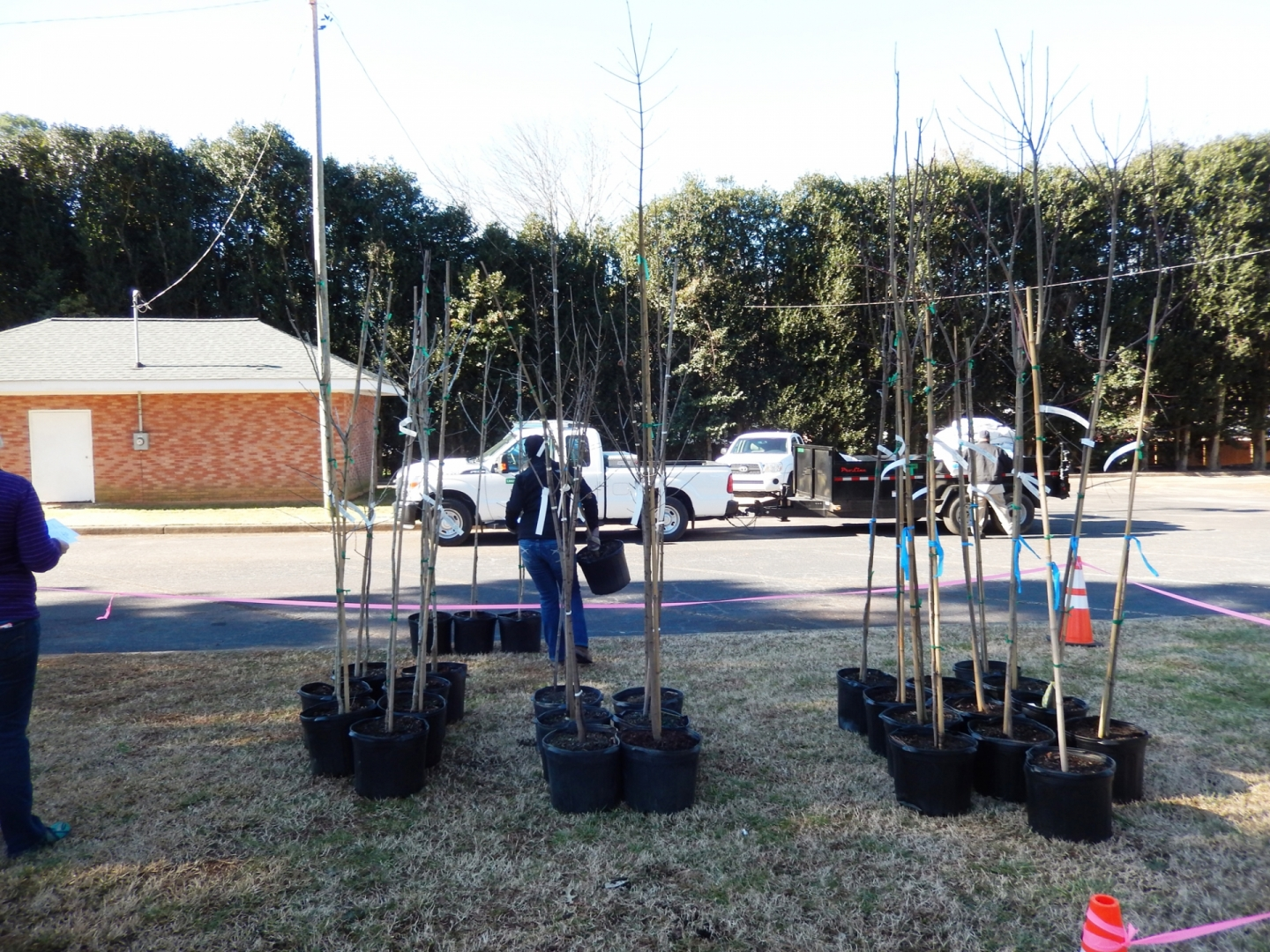 Small trees await planting in the Eastway Park-Sheffield neighborhood, a project in collaboration with TreesCharlotte. Photo: Mae Israel