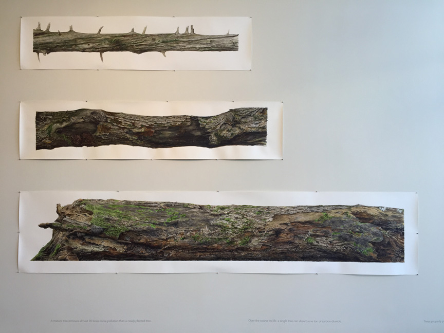 obert Wiens's large watercolors of tree segments