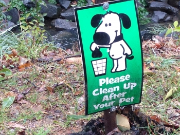 Pet droppings can contaminate steams. Photo: Mary Newsom