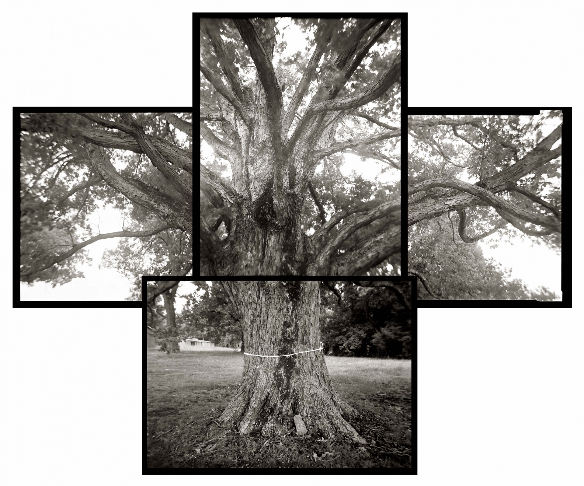 Spared Tree by Linda Foard Roberts