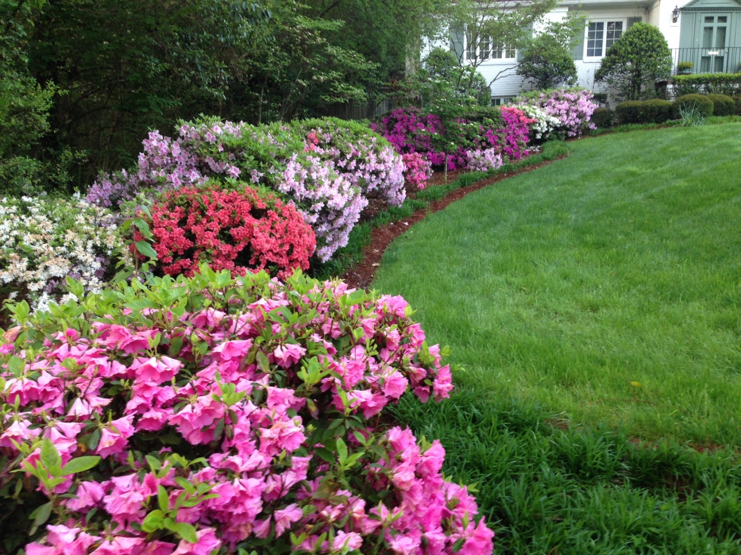 Lawns can be beautiful, but they make for poor habitat. Photo Mary Newsom